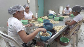 Escola de Gastronomia: Na imagem, há quatro mulheres paramentadas com toucas e uniformes brancos em uma mesa catando feijões.